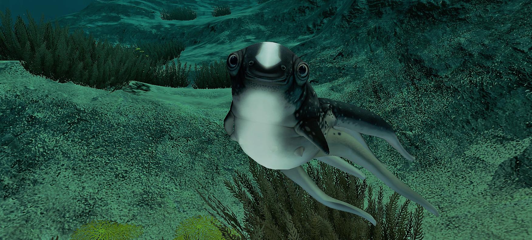 cute cuttle fish