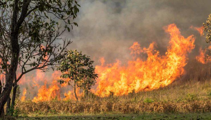 Australian Brush Fires