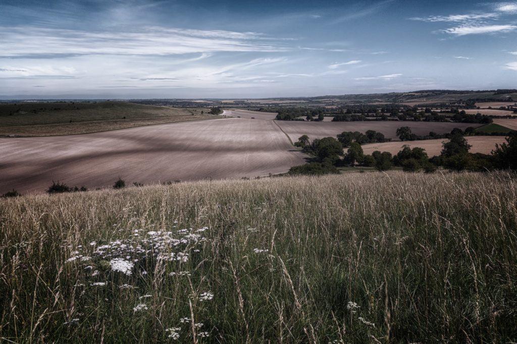 Foreground grasses JPEG HR COLD DESAT EDIT