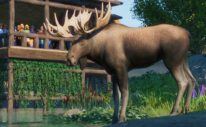 Planet Zoo Goes West With The North America Animal Pack